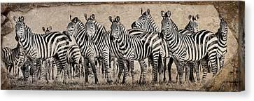 Zebra Herd Rock Texture Blend Wide Canvas Print by Mike Gaudaur