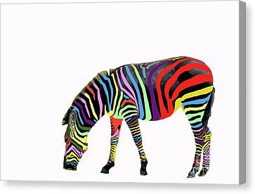 Zebra In My Dreams Canvas Print by Bonnie Barry