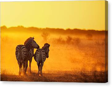 Zebra In The Light Canvas Print by Ben Mcrae