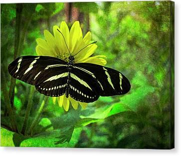 Zebra Longwing Canvas Print