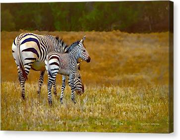 Zebra Mom And Foal Canvas Print by Dyle   Warren