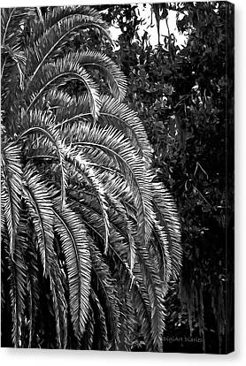 Canvas Print featuring the photograph Zebra Palm by DigiArt Diaries by Vicky B Fuller