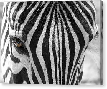 Crosswalk Canvas Print - Zebra Portrait by Heike Hultsch