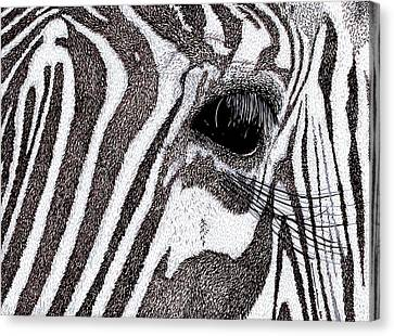 Zebra Portrait Canvas Print by Karl Addison