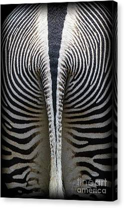 Zebra Stripes Canvas Print by Heiko Koehrer-Wagner