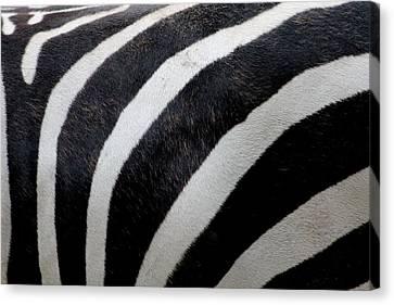 Zebra Wall Design 5 Canvas Print