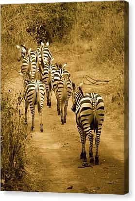 Exploramum Canvas Print - Zebras Heading Home - Antique by Exploramum Exploramum