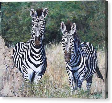 Zebras In South Africa Canvas Print