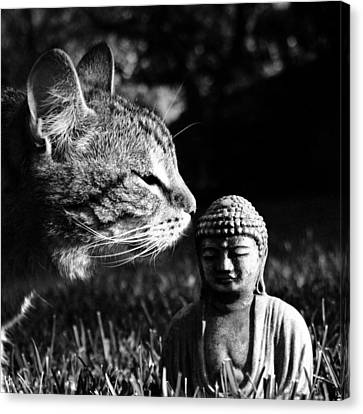 Zen Cat Black And White- Photography By Linda Woods Canvas Print by Linda Woods