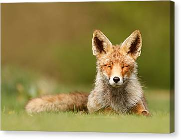 Zen Fox Series - Born To Be Happy Canvas Print