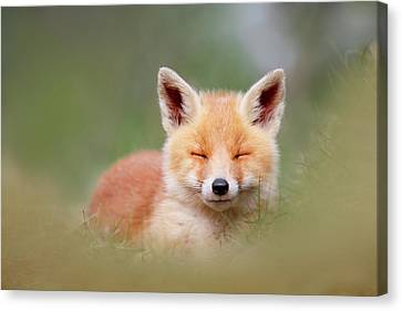 Kit Fox Canvas Print - Zen Fox Series- Happy Baby Fox by Roeselien Raimond