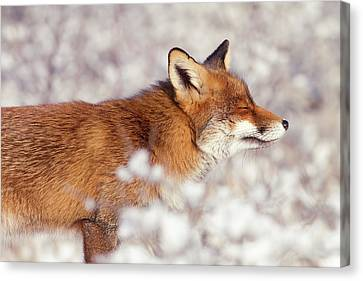 Zen Fox Series - Happy Fox IIn The Snow Canvas Print