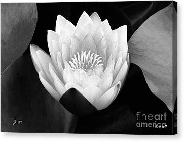 Waterlily Rising Canvas Print