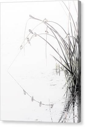 Zen Streamside Canvas Print
