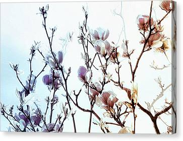 Canvas Print featuring the photograph Zen Thoughts by Elaine Manley