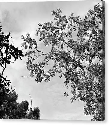 Exterior Canvas Print - Zen Trees Up In The Air by Guido Montanes Castillo