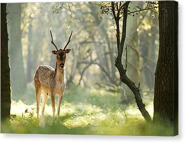 Zendeer Canvas Print by Roeselien Raimond