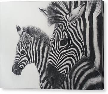 Zebras Canvas Print by Adrienne Martino
