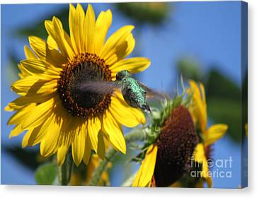 Zeroing In On The Subject Matter Canvas Print by Cathy  Beharriell