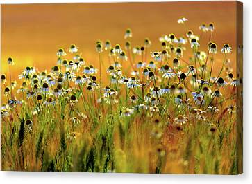 Close Focus Floral Canvas Print - Zest For Life by Mah FineArt