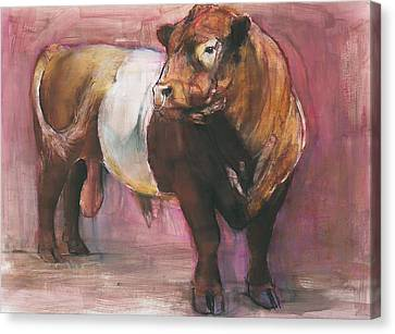 Zeus  Red Belted Galloway Bull Canvas Print by Mark Adlington