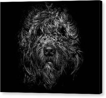 Canvas Print featuring the photograph Ziggy Portrait No 1 by Brian Carson