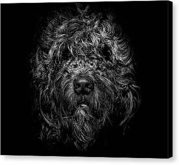 Ziggy Portrait No 1 Canvas Print by Brian Carson