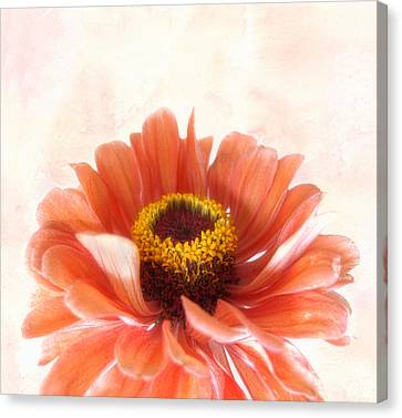 Zinnia Bright Canvas Print