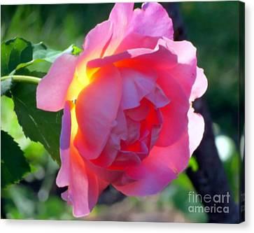 Zora's Garden Rose Canvas Print by Donna Cavanaugh