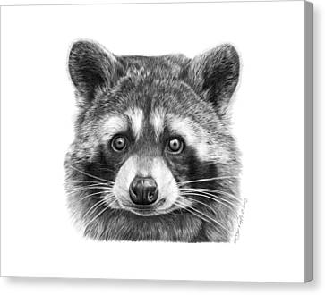 046 Zorro The Raccoon Canvas Print by Abbey Noelle