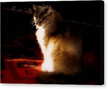 Zusje Sunbathing In The Light Canvas Print by Martin Morehead