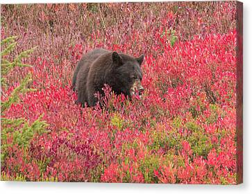 Berries For The Bear Canvas Print