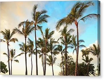 Kona Canvas Prints Page 4 Of 35 Fine Art America