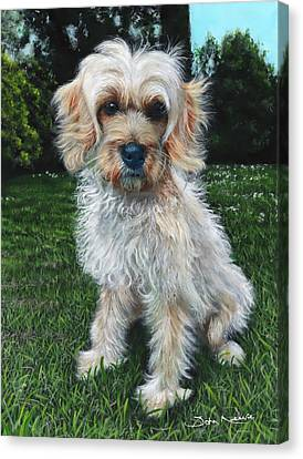 Portrait Of Toffee Canvas Print