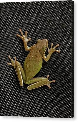 Tree Frog Canvas Print