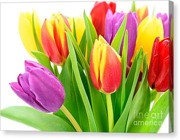 Beautiful And Colorful Tulips Canvas Print