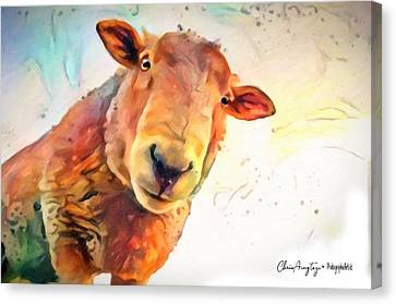 A Curious Sheep Called Shawn Canvas Print