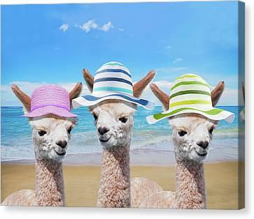 3 Alpacas At Beach, Nursery, Girls Room, Wall Art, Bedroom Decor, Kids Art, Gift For Her, Llamas Canvas Print