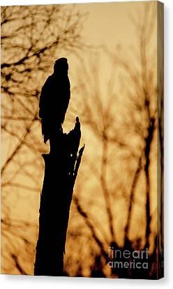 An Eagle Silhouette Canvas Print