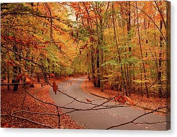 Autumn In Holmdel Park Canvas Print