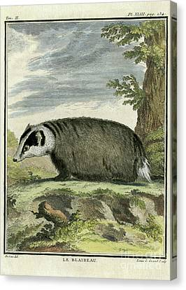 Burrowing Animals Canvas Prints Page 22 Of 31 Fine Art America