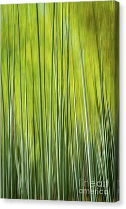Bamboo Blur Canvas Print