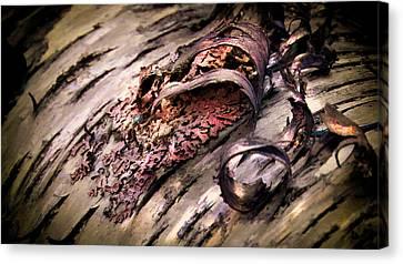 Bark Curl 002 Canvas Print