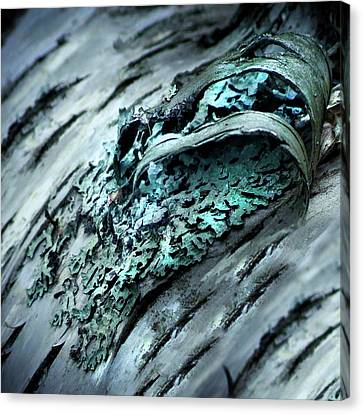 Bark Curl 4 Canvas Print