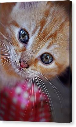 Beautifull Kitty Canvas Print