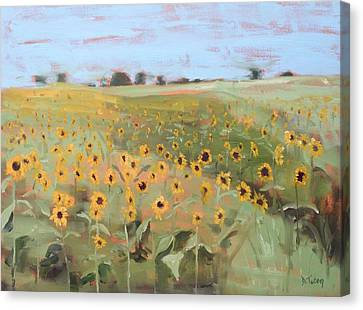 Bedford County Sunflower Field Canvas Print