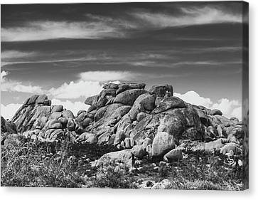 Big Rock Joshua Tree 7395 Canvas Print