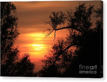 Blazing Orange Sunset With Tree Silhouettes With The Sun Canvas Print