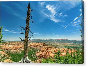 Bryce Canyon Np - Bryce Point Canvas Print