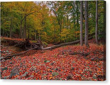 Buck Branch Runs Dry Canvas Print